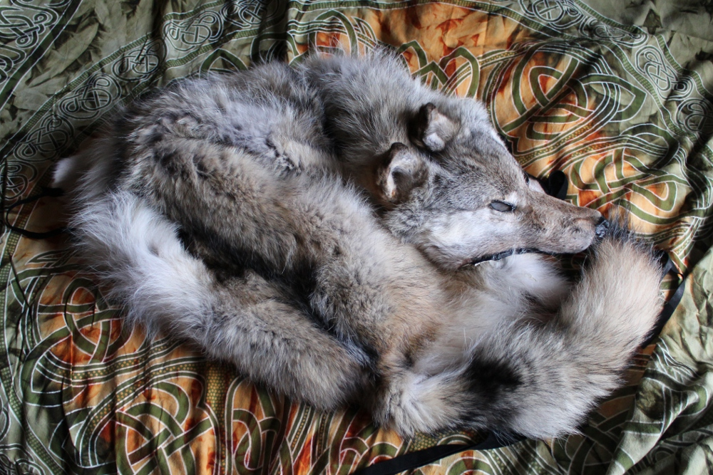 graywolf5