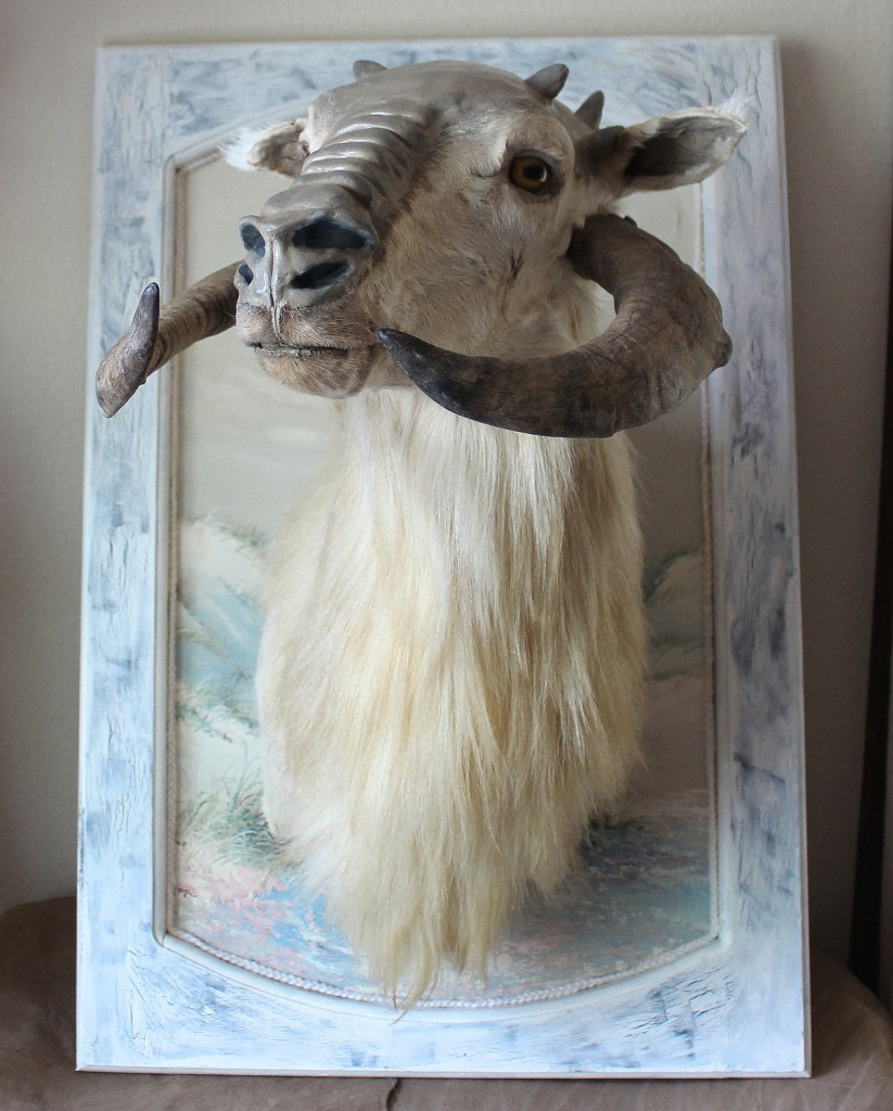"""The Teacup Tauntaun"" - altered taxidermy sculpt that even Jabba would covet"