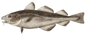 Save the cod, not the codswallop!